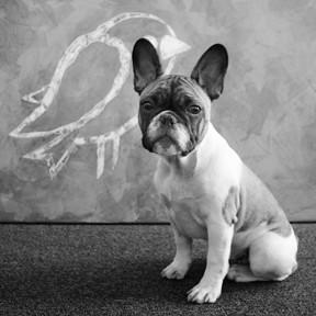 louis-hund