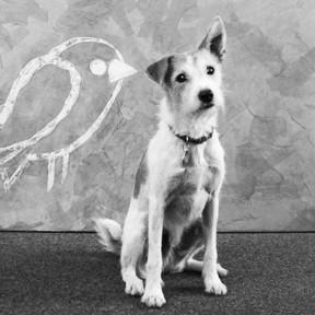 benji-office-hund