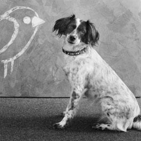 dorie-marketing-hund